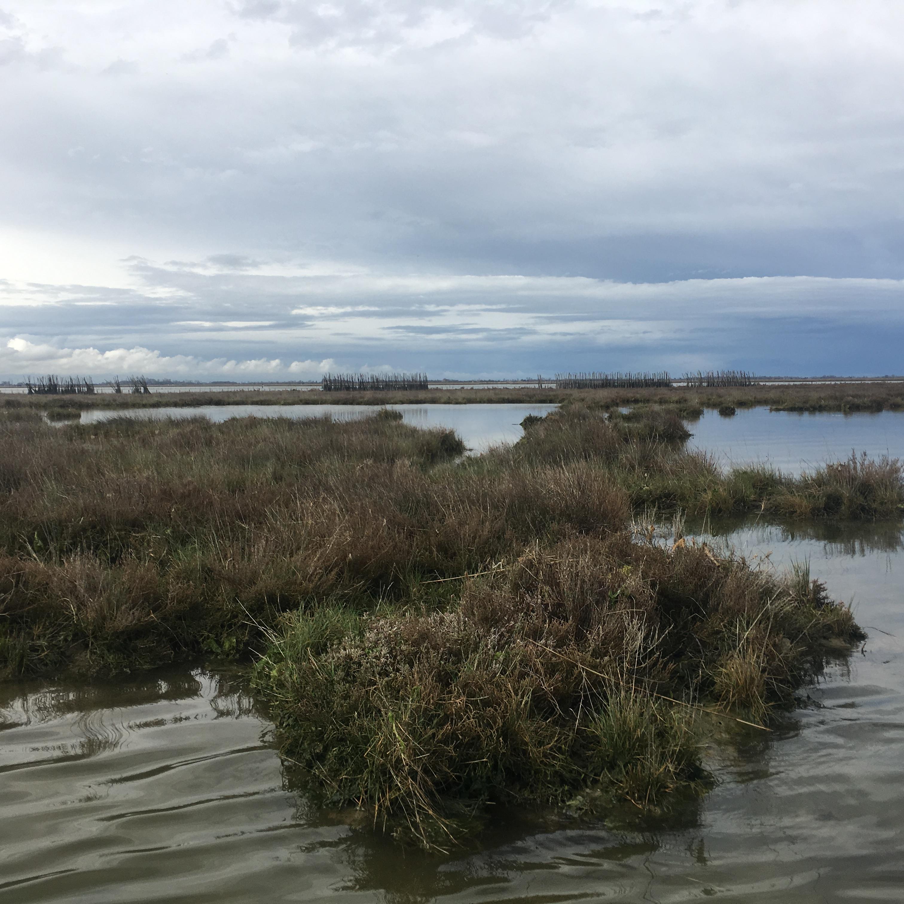 Laguna Viva